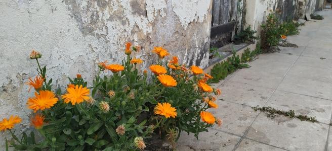 Fotografía Flores A. G. F